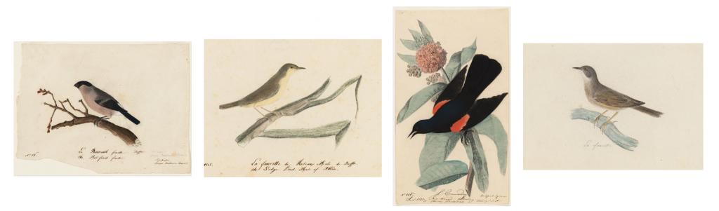 audubon_birds